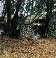 """Veduta di resti di muraglia adiacenti alla """"casa preromana"""""""