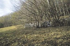 Resti di muraglia su Cort dal Salvan.